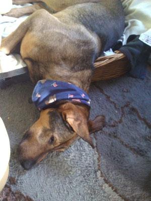 Maxi saß sehr lange im Tierheim. Vergessen und immer wieder übersehen. Ohne Hilfe hätte er es nicht geschafft noch einmal glücklich zu sein.