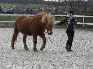 Mit Freude an einer Partnerschaft zwischen Mensch und Pferd