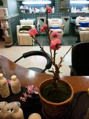 美容室そうだすいのお花