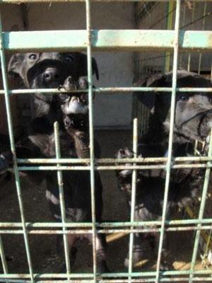 Hunde Tötungsstation