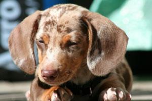 gewaltfreie Hundeerziehung