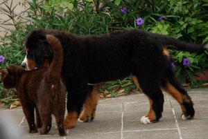 Helmut ( 4mois) et Chabal
