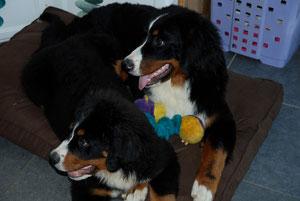 Harper ( 6 mois) et Helmut ( 4 mois) /octobre 2012
