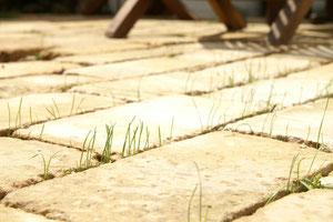 芝生の産毛です