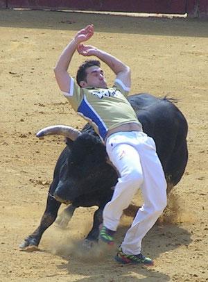 Campeón Fallas '09