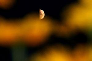 Mond hinter gelben Blumen