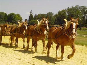 attelage à 3 chevaux en flèche
