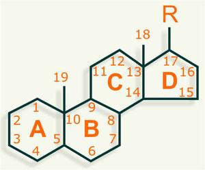 Esteroides estructura química