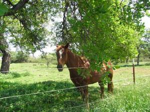 お馬さん発見!