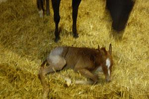 Geburt von Unnamed (Chumani) 05.04.2011