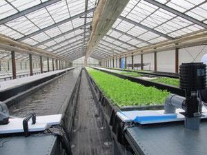 省エネ型水耕栽培技術を活用した植物工場