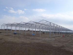 建設中の水耕栽培ハウス