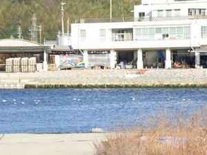豊浜漁港も工事中です。市場を拡大中。