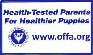 Gesundheitsauswertungen unserer Hunde sowohl bei OFA/ USA als auch FCI