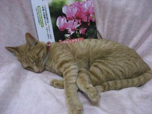 愛子chanお昼寝中・・・・