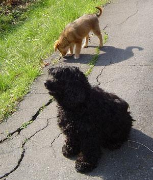 Rosi und Lilly