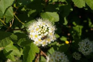 Фото 7. Фото соцветия. Показан большой перепад освещенностей