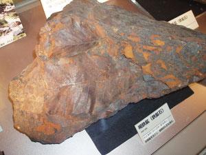 県立自然史博物館 旧群馬鉄山の鉄鉱床は鉄を好む植物が水中の鉄イオンを吸収、蓄積し鉱床となった珍しい露天堀鉱山です。土壌中の重金属を植物が吸収除去することは可能です。