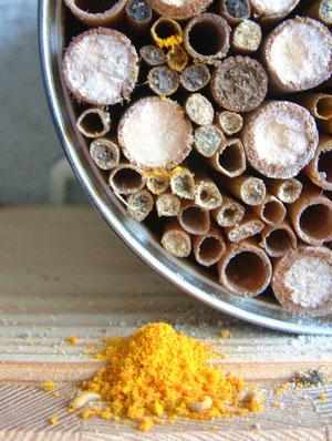 """Wird der Nistplatz knapp """"recycled"""" die Gewöhnliche Löcherbiene bereits besetzte Niströhren. Oben im Bild ist der geleerte Naturstrohhalm mit gelben Pollenresten zu sehen [zum Vergrößern bitte anklicken]"""