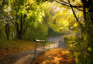Herbstlicher Waldweg am Rechberg