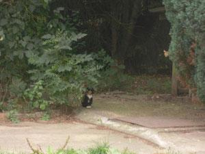 Eine der Adultkatzen vor Ort
