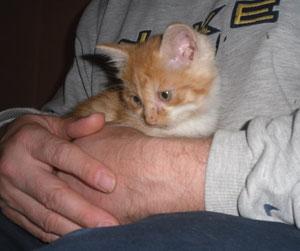 unser kleiner Wildfang Garfield