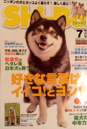 左下には白柴犬SUZU♀がちょびっと。