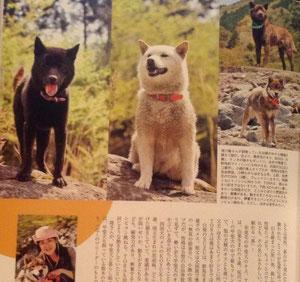 甲斐犬BOSS♂、白柴犬SUZU♀、甲斐犬TORA♂、四国犬KOYUKI♀