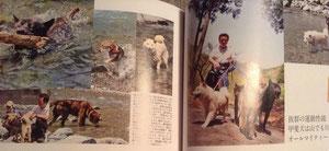『甲斐、四国、柴犬が川泳ぎに挑んだ!』