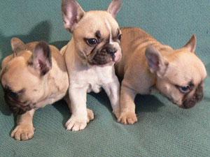 Puppies 2010 (Parents Nessy+Running Wild)