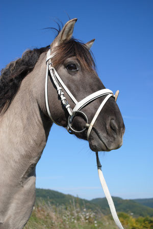 Das beste Volti-Pony