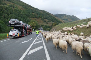 Pendant que nous marchons, elles roulent sur des camions...