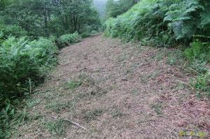 N°1/ Le Chemin de Bourdieu-Bilboquet connaît un nouveau parcours au-dessus de la Propriété Mirandette, un fauchage soigné malgré la difficulté d'attaquer en terrain vierge depuis belle lurette !