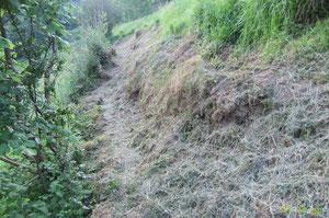 N°21/ En remontant plus haut, le Chemin de Labayas est dégradé par le bétail (un système de clôtures et de chicanes permettrait d'épargner l'assiette), fauchage acceptable de l'ONF