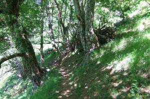 N°20/ Gros chablis dégagé au-dessus du Chemin des Jaupins par les bénévoles de la Commune d'Aydius.