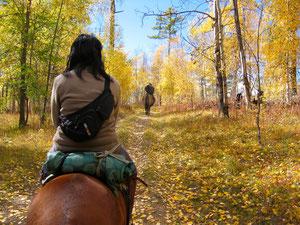 A cheval au Khentii sous les feuilles d'automne