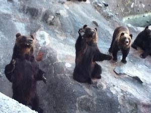 クマたちは芸達者揃いでした!