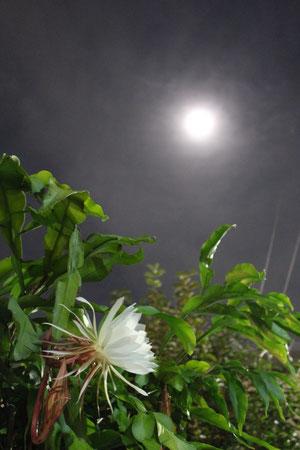 月と月下美人