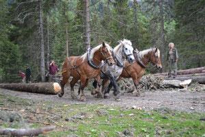Holzrücken für die Schreinerei