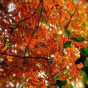 落ち葉の管理