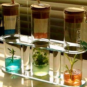 家庭菜園の土壌診断+土壌改良
