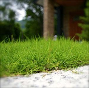 芝生の新植工事