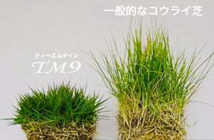特殊な芝(TM9)