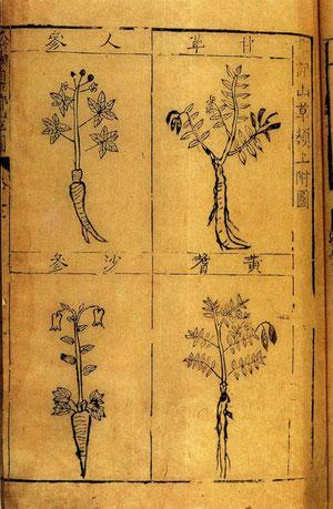 Ben cao gang mu (compendium of Materia Medica)