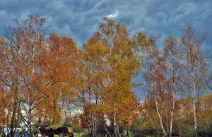 Couleurs d'automne.