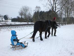 ein braves Pferd kann vieles lernen