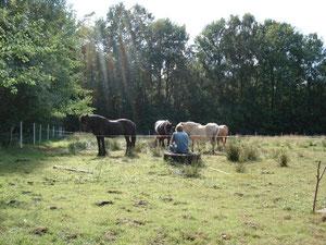 nach getaner Arbeit Pause neben den Pferden