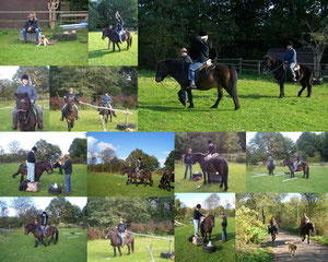 Bei uns ist vieles möglich, das Pferd & Mensch Freude macht.