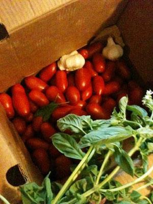 今年も作りました、大量のトマトソース。