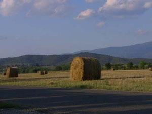 この干し草が、いかにもトスカーナって感じですよね。